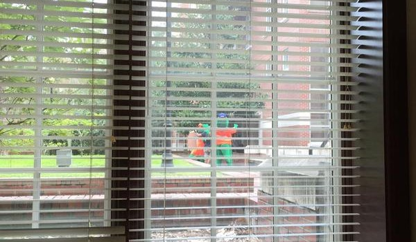 Blog: Albert & Alberta sighted outside office during…